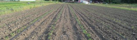 irrigazione goccia goccia